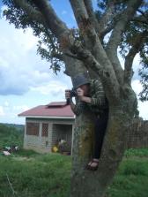 Richard klettert in einen Baum, um ein Foto aus der Vogelperspektive zu machen