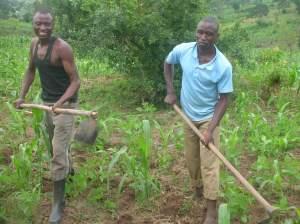 Zwei Nachbarn bauen Mais an