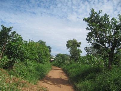 Eine Straße in Rwamwanja