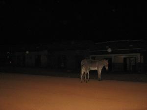 Zwei Esel stehen auf der Straße. Es sind die einzigen Esel in Rwamwanja