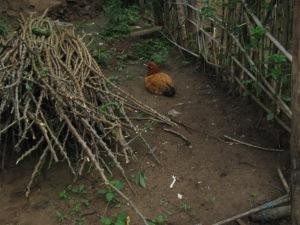 Unser Huhn in unserem Garten