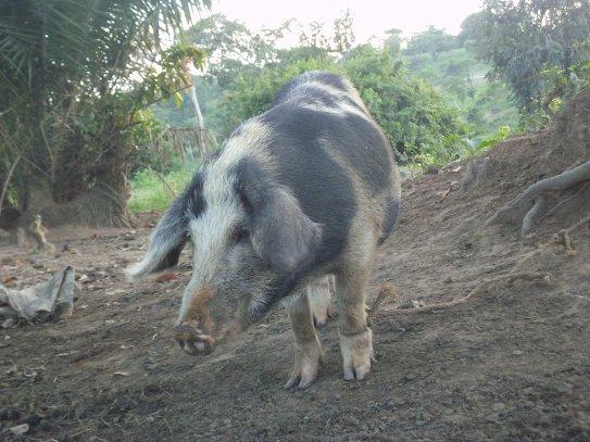Ein Schwein von Nachbarn