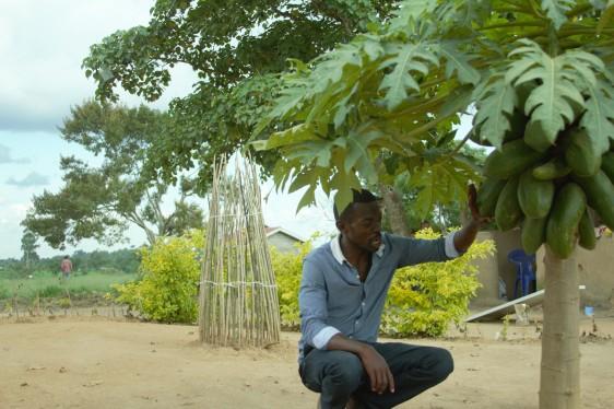 Mack erntet Papayas